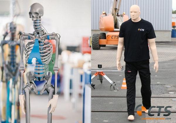 Skelett (links) und vollständiger biofideler Dummy (rechts)