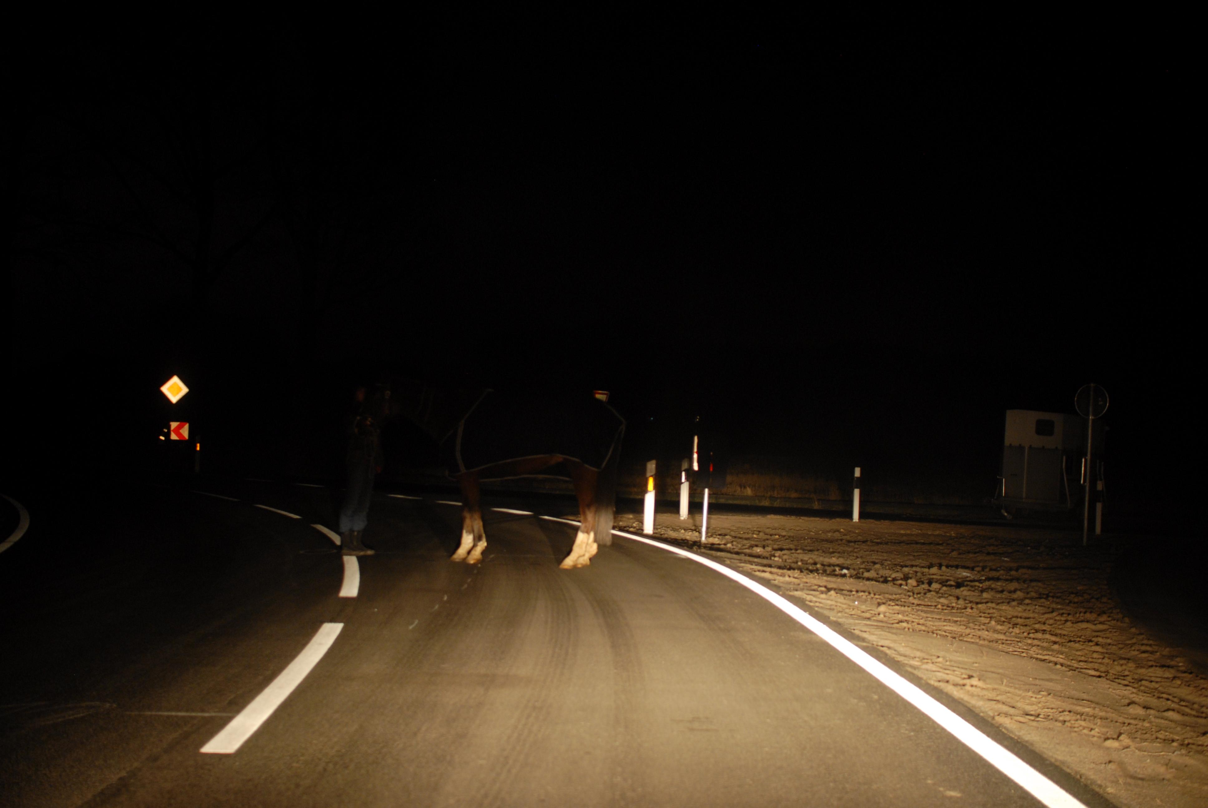 Sicht auf ein die Straße überquerendes Pferd